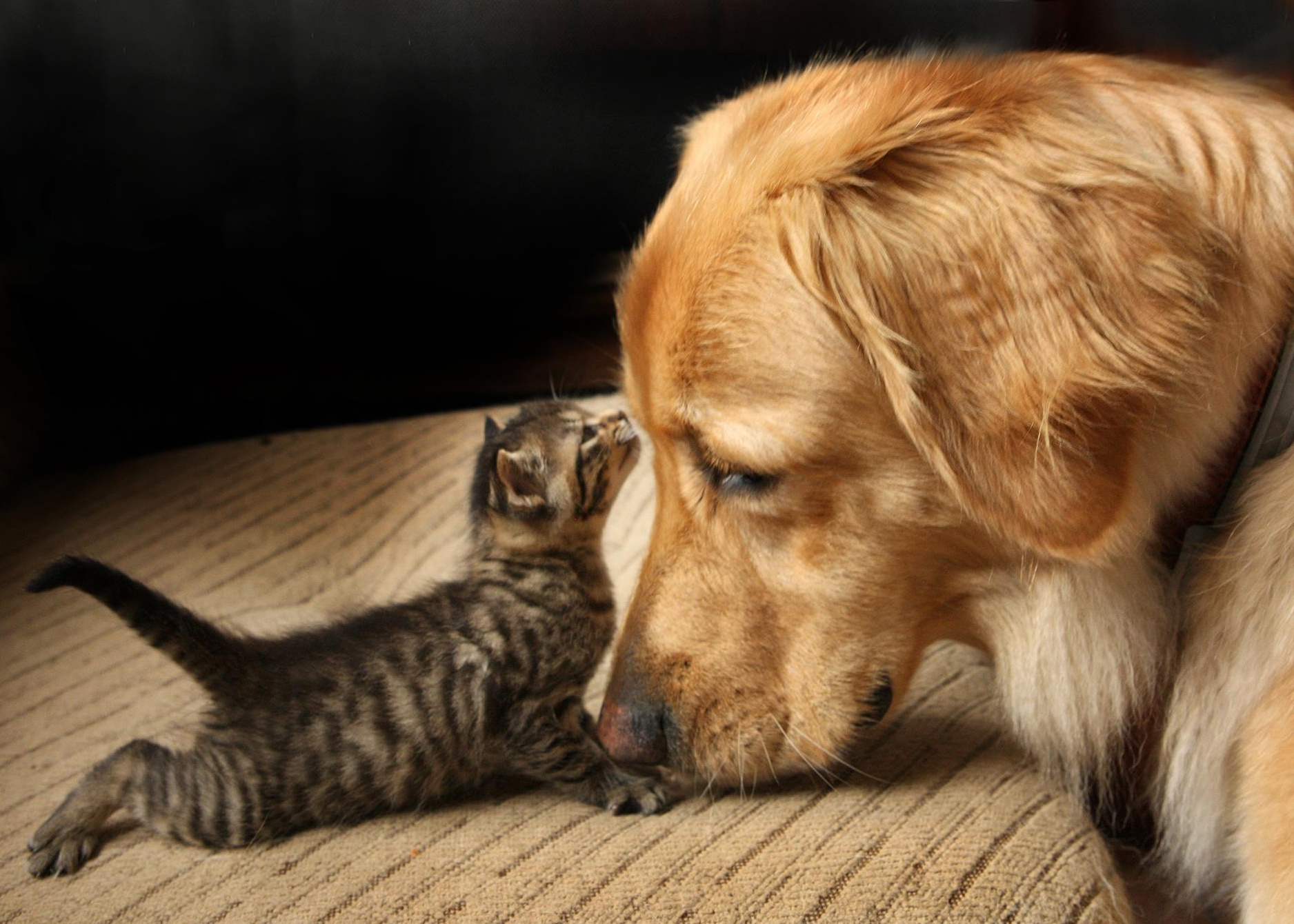 The benefits of pet-friendly investment properties